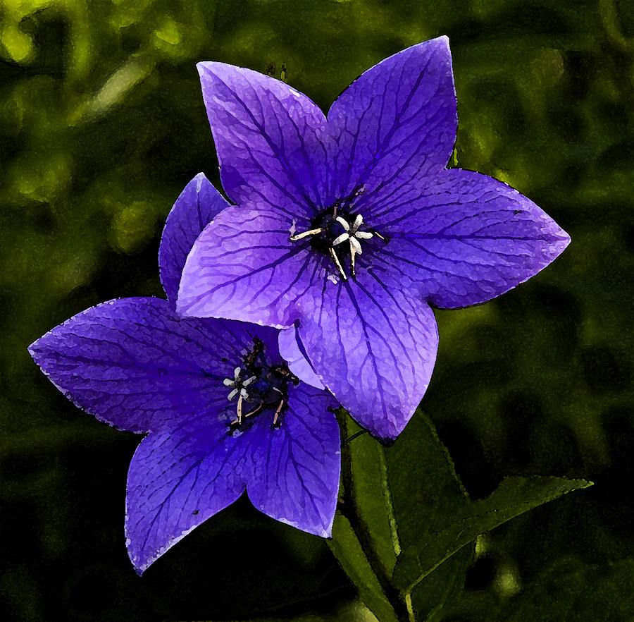 Purple Photograph