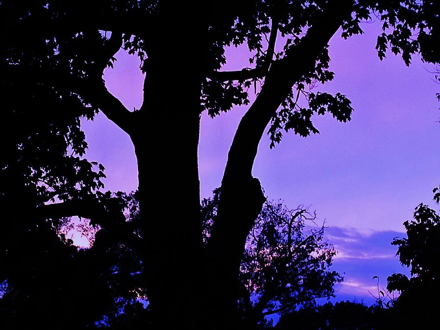 Purple Morning Photograph