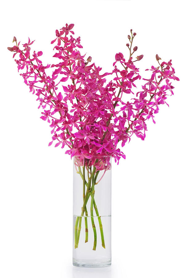 Purple Orchid In Vase Photograph  - Purple Orchid In Vase Fine Art Print