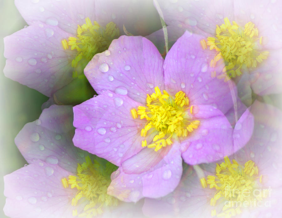 Purple Prism Photograph  - Purple Prism Fine Art Print