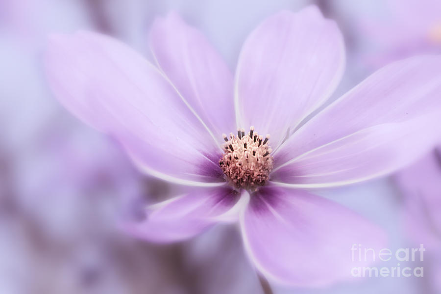 Purple Satin Photograph  - Purple Satin Fine Art Print