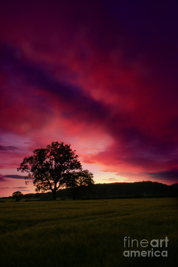 Purple Skies Photograph