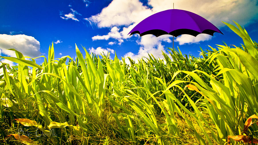 Purple Umbrella In A Field Of Corn Photograph  - Purple Umbrella In A Field Of Corn Fine Art Print