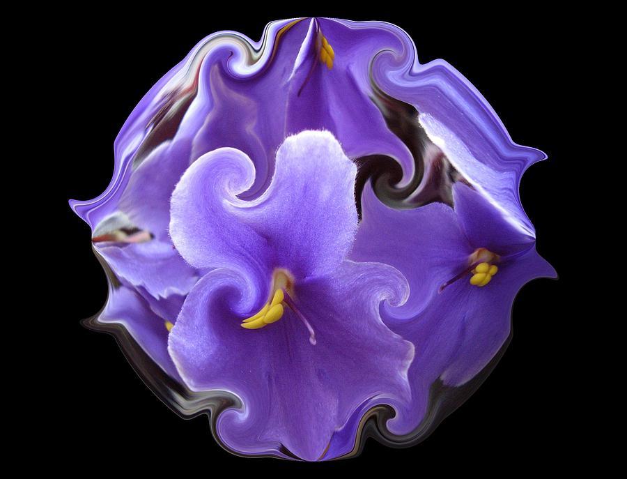 Purple Violets II Photograph