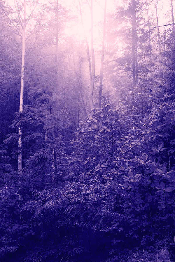 Purple Woods Photograph  - Purple Woods Fine Art Print