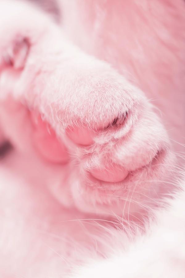 Pussy Cat Photograph