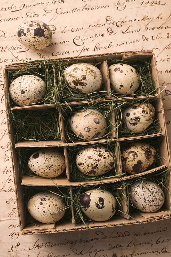 Quail Eggs In Box Photograph