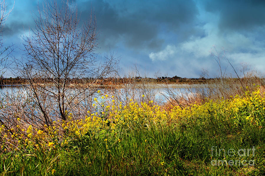 Quarry Lakes In Fremont California . 7d12643 Photograph  - Quarry Lakes In Fremont California . 7d12643 Fine Art Print