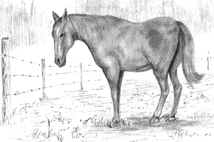Quarter horse drawing - photo#24