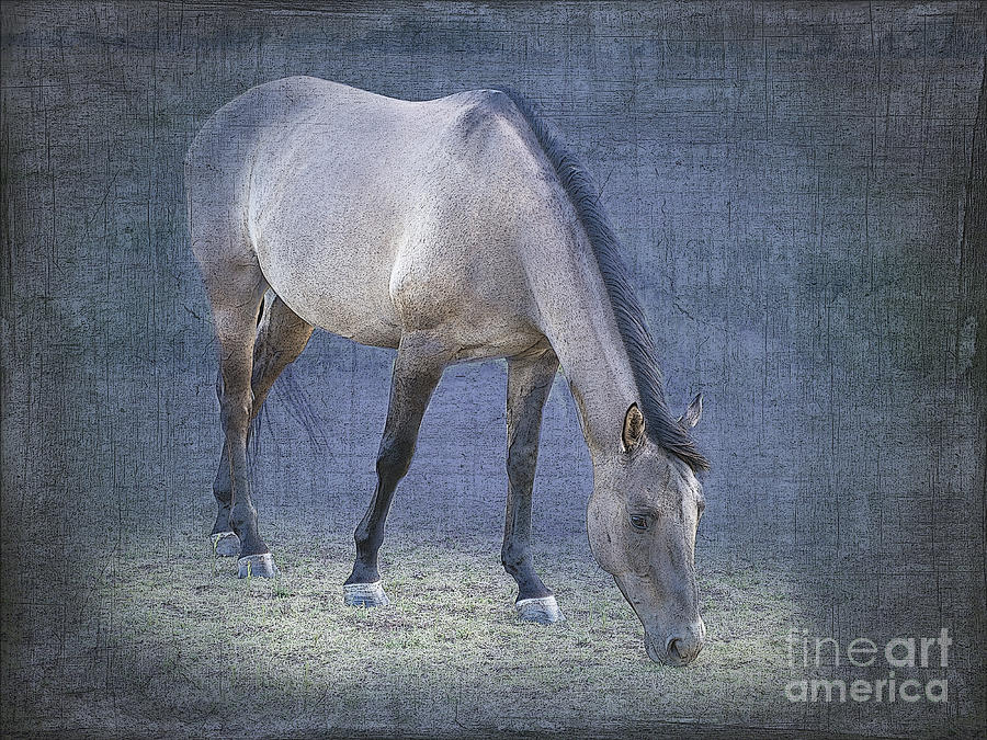 Quarter Horse In Blue Photograph