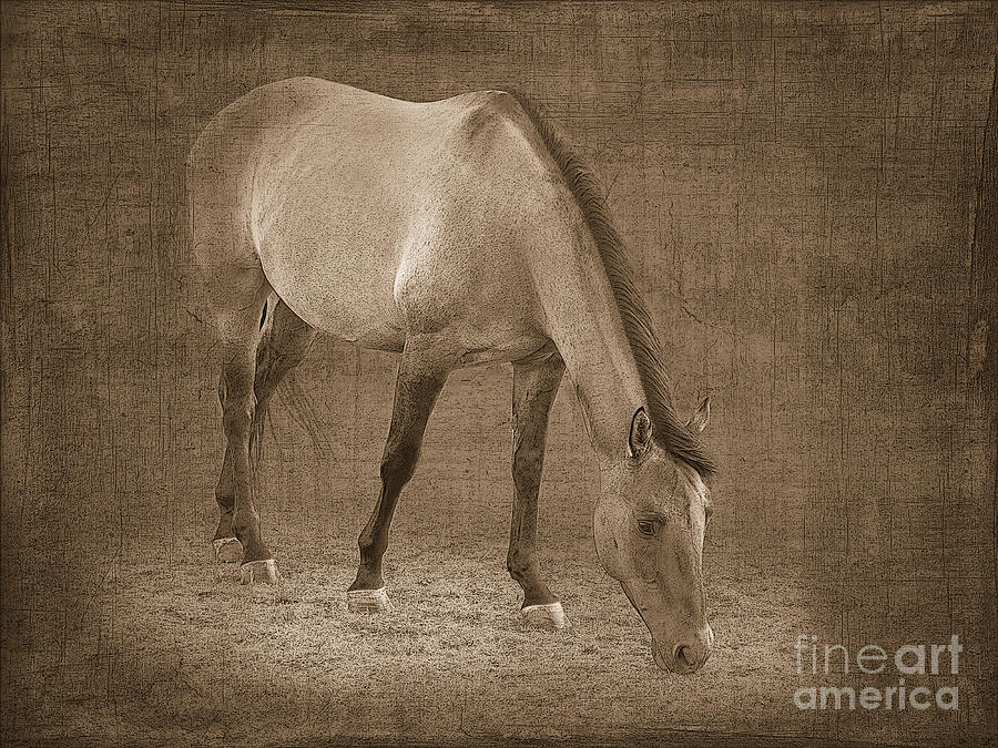 Quarter Horse In Sepia Photograph  - Quarter Horse In Sepia Fine Art Print