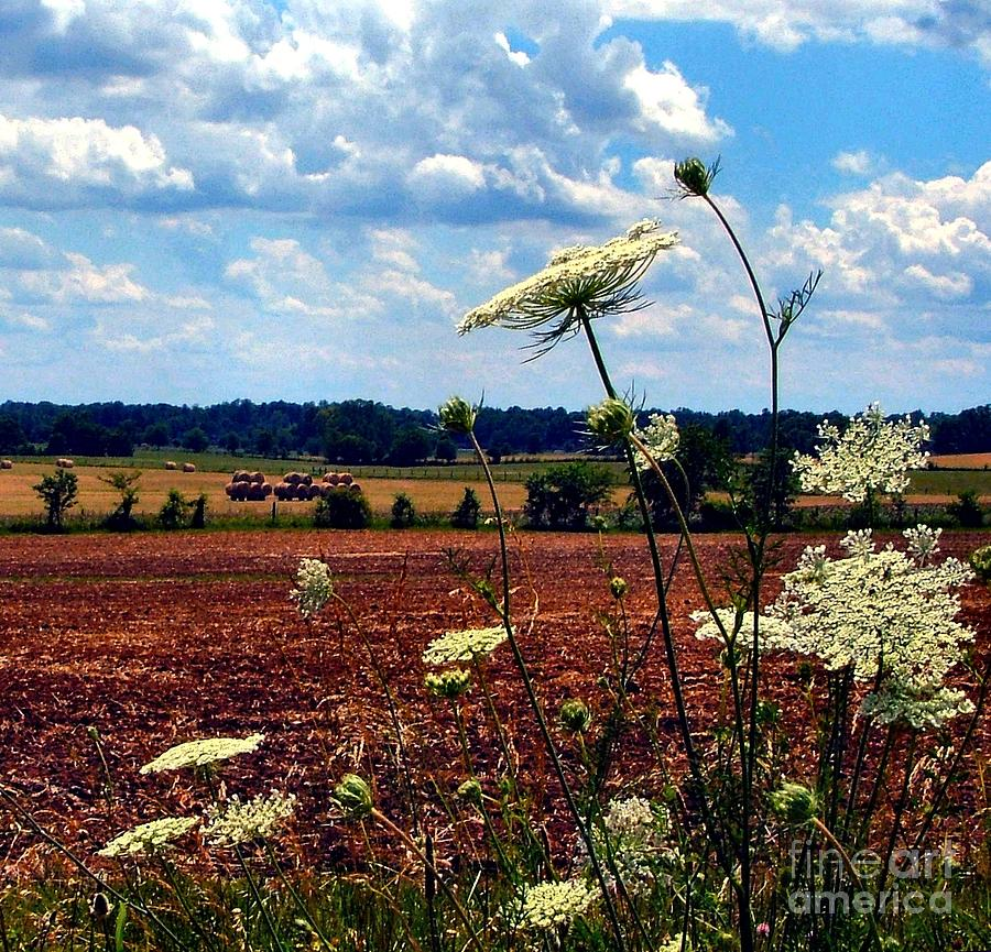Queen Annes Lace And Hay Bales Photograph  - Queen Annes Lace And Hay Bales Fine Art Print