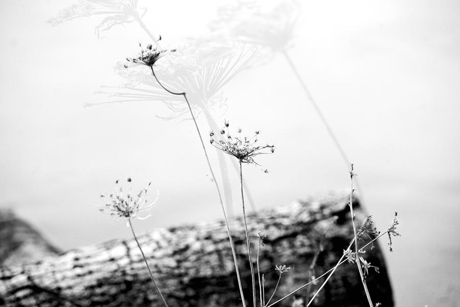 Black White Photograph - Queen Annes Montage by Bonnie Bruno