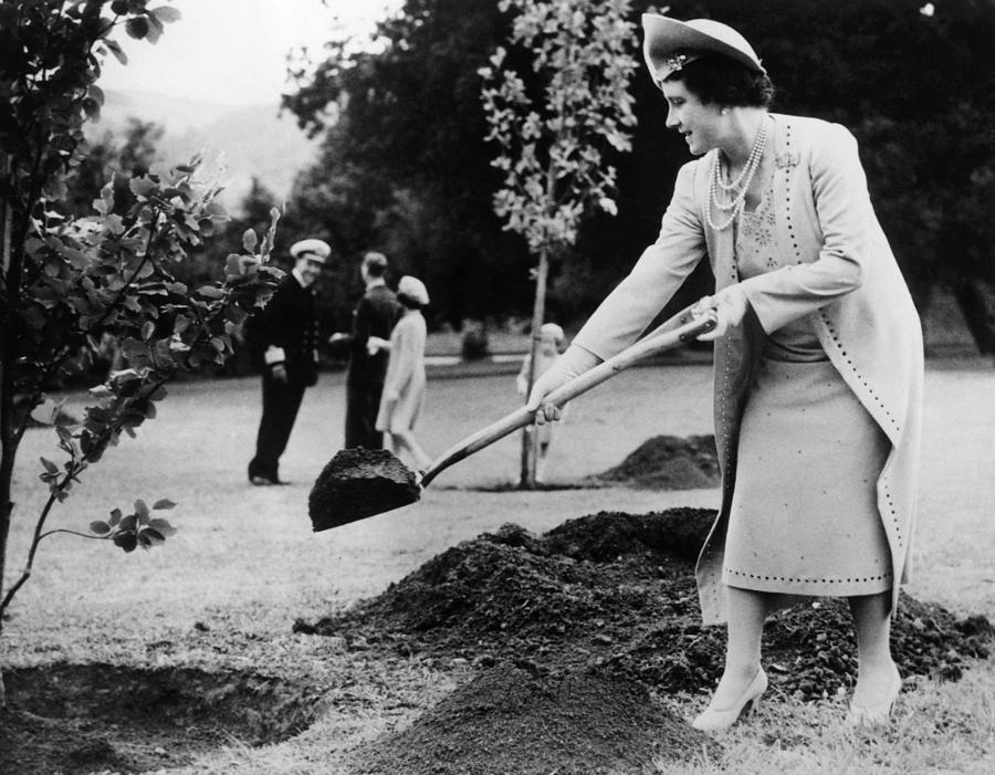 Queen Elizabeth, The Former Duchess Photograph