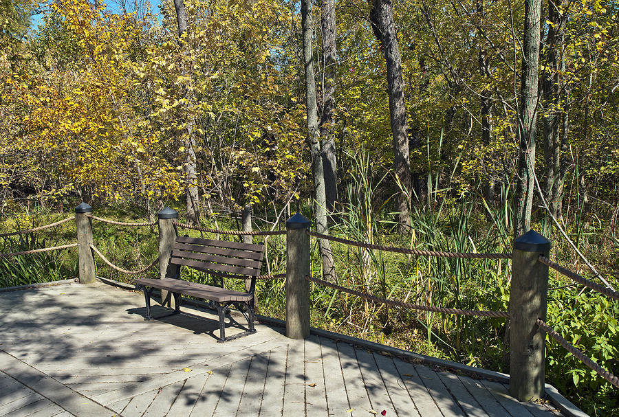 Quiet Bench On Theodore Roosevelt Island Photograph  - Quiet Bench On Theodore Roosevelt Island Fine Art Print