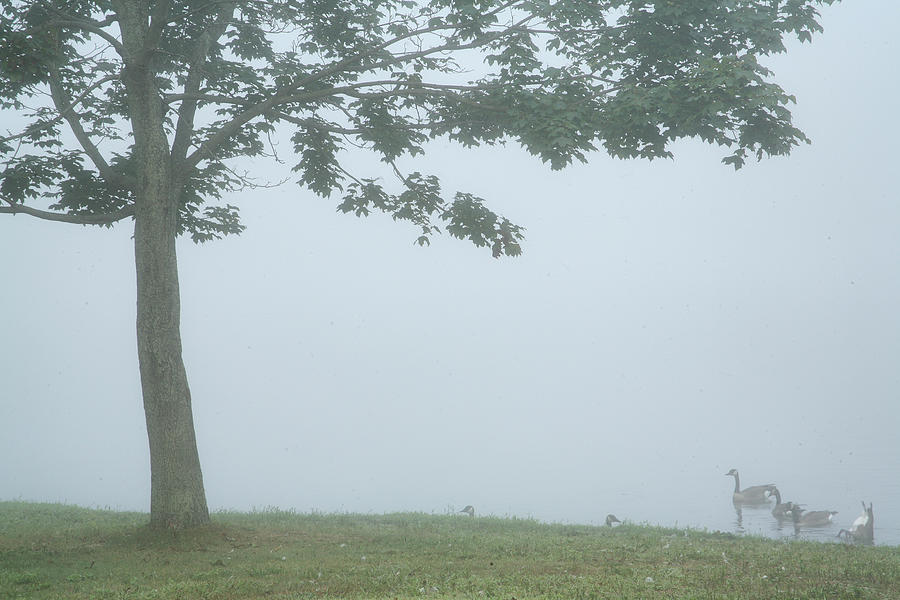 Fog Photograph - Quiet Fog Rolling In by Karol Livote