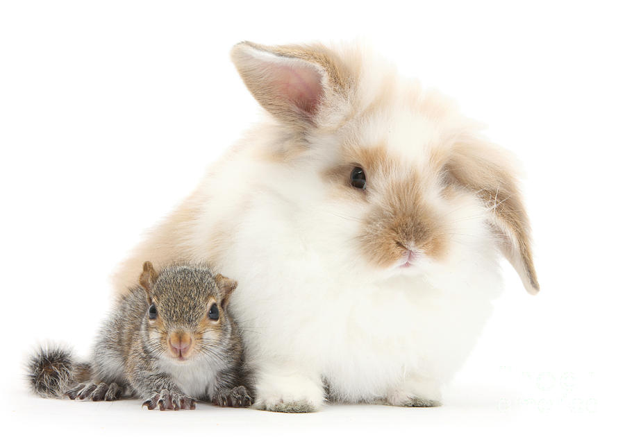 Rabbit And Squirrel Photograph  - Rabbit And Squirrel Fine Art Print