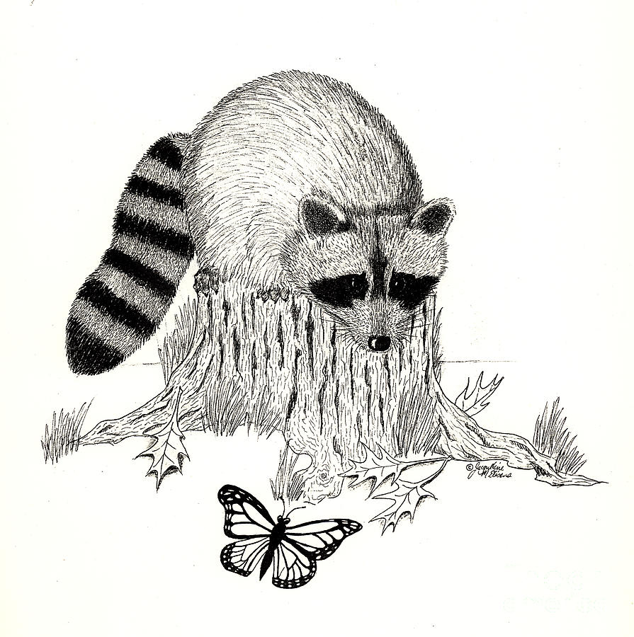 Raccoon Drawing - Viewing Gallery Raccoon Face Coloring Page