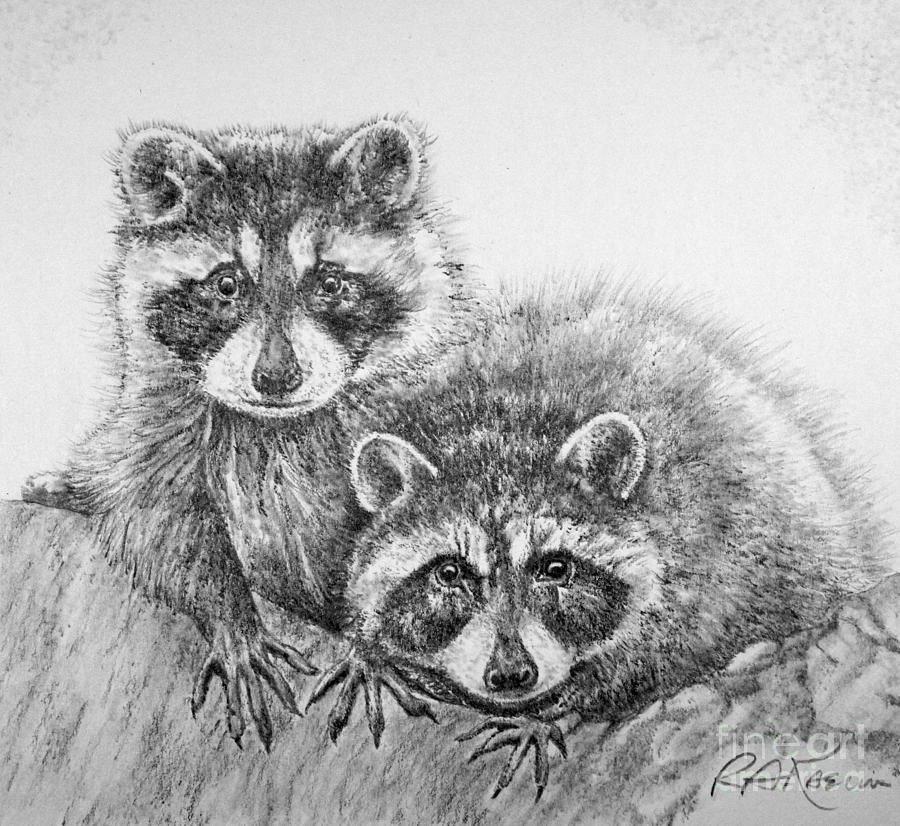 Raccoon Pals Drawing  - Raccoon Pals Fine Art Print