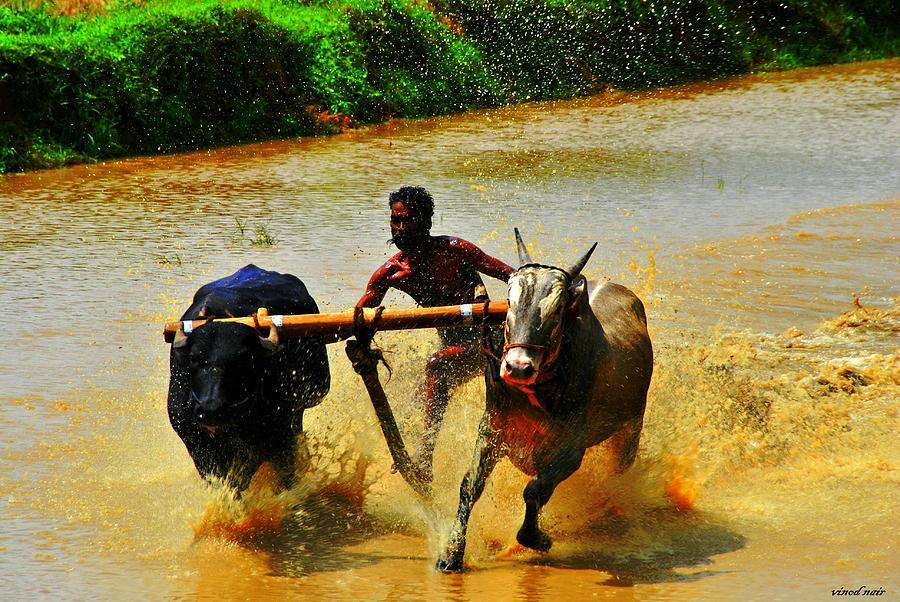 Photograph - Race by Vinod Nair