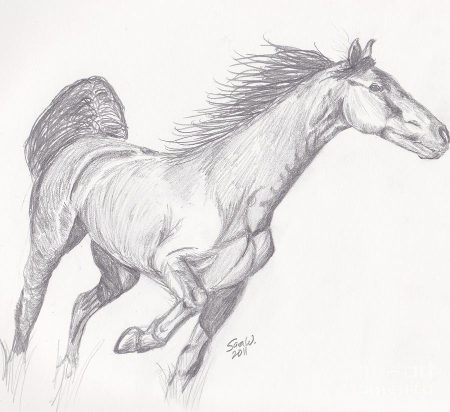 Racking Horse Sketch Drawing by Sara Williams