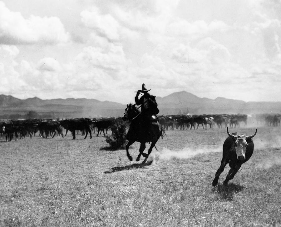 Raguero Cutting Out A Cow From The Herd Photograph