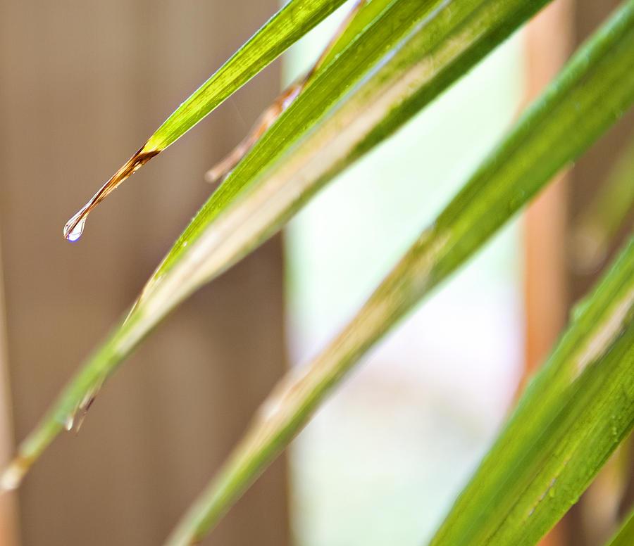Rain Drop Photograph