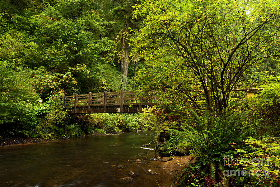 Rain Forest Bridge Photograph