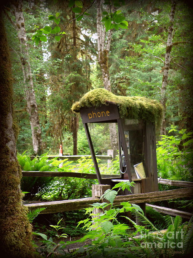 Rain Forest Telephone Booth Photograph  - Rain Forest Telephone Booth Fine Art Print