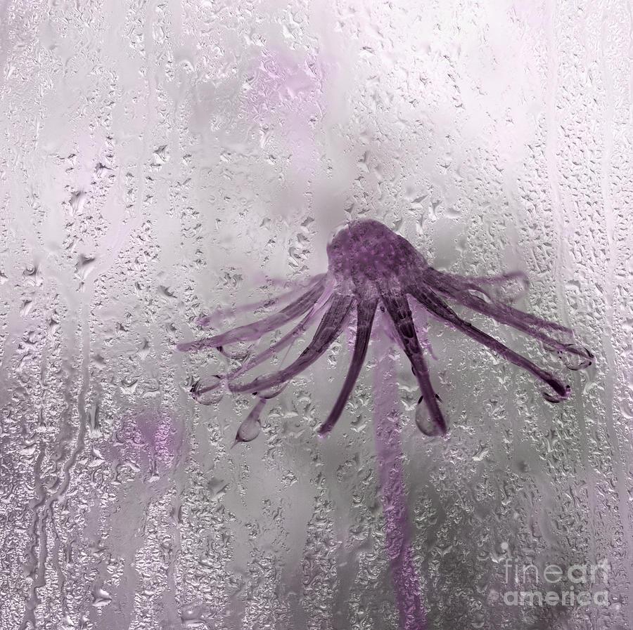 Rain On Me - Pink Photograph