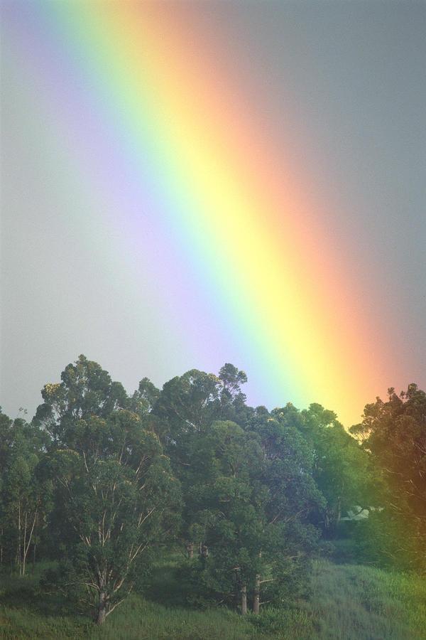 Rainbow And Misty Skies Photograph