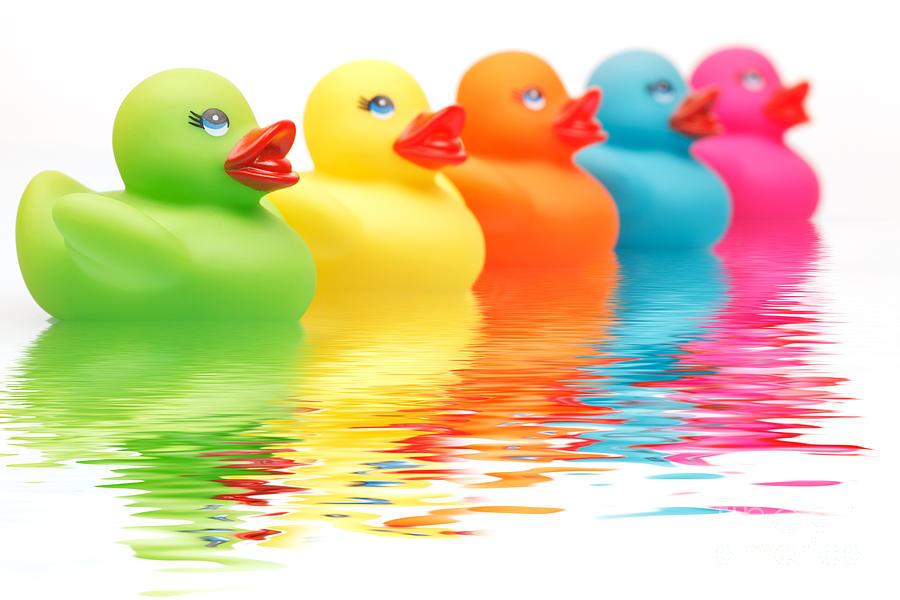 Rainbow Ducks Photograph