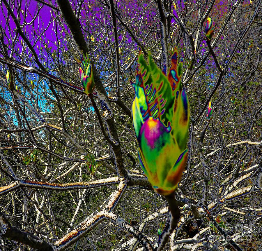Rainbow Explosion Photograph
