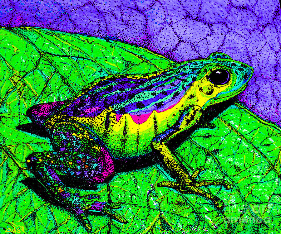 Rainbow Frog 2 Drawing