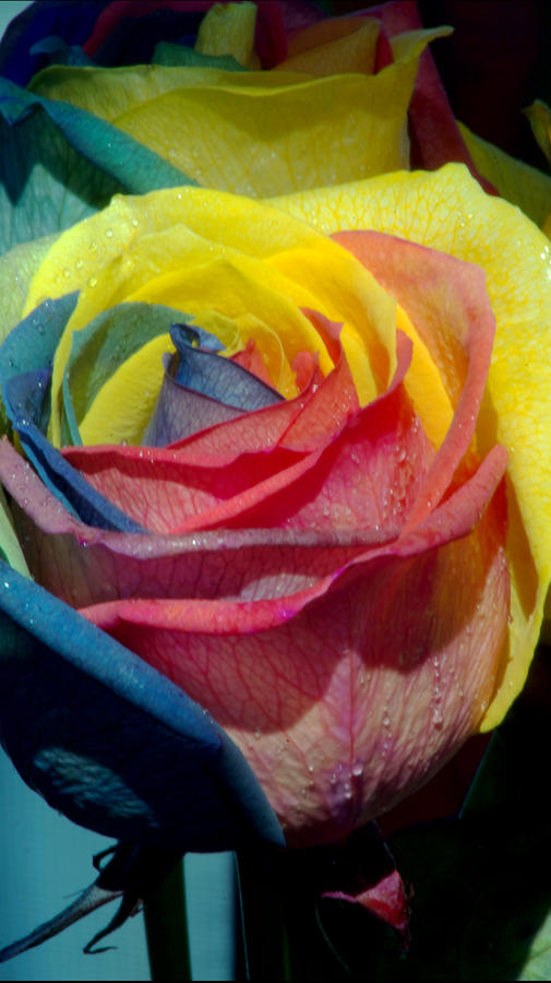 Rainbow Of Love 2 Photograph