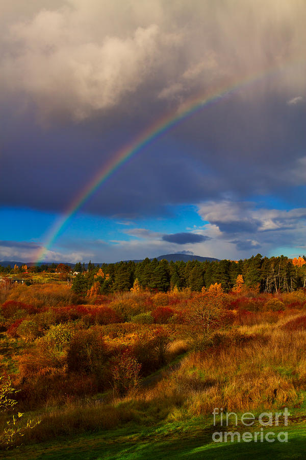 Rainbow Over Rithets Bog Photograph  - Rainbow Over Rithets Bog Fine Art Print