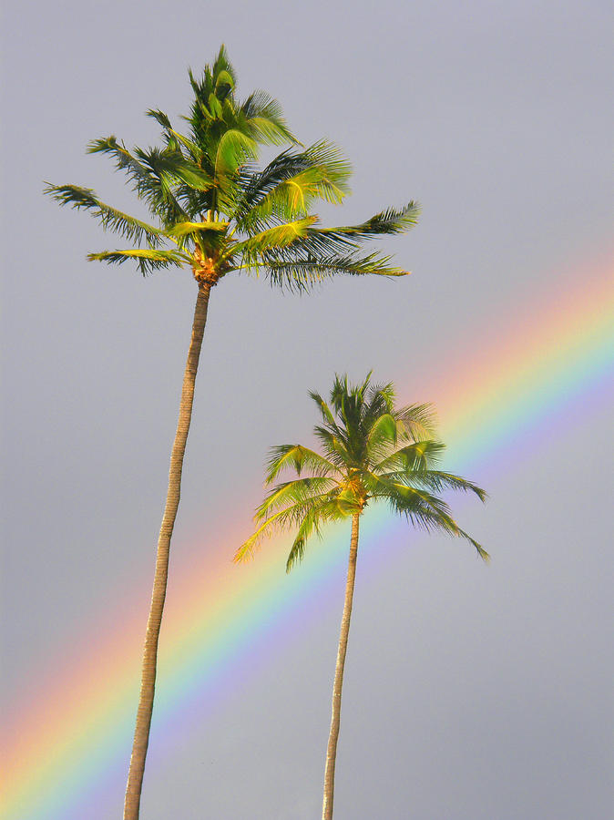Rainbow Palms Photograph  - Rainbow Palms Fine Art Print