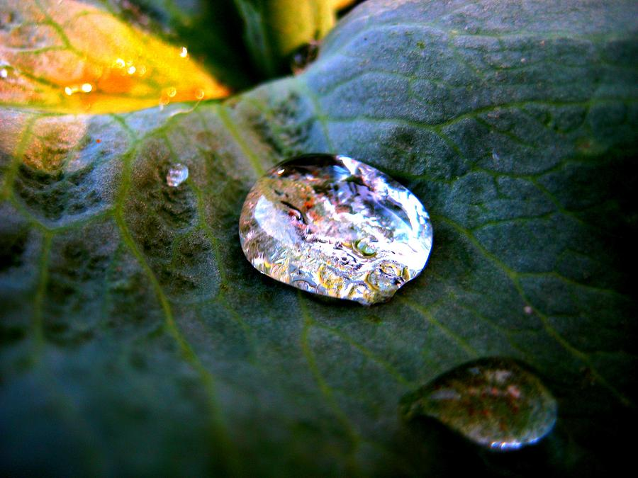 Raindrop On Leaf Photograph  - Raindrop On Leaf Fine Art Print