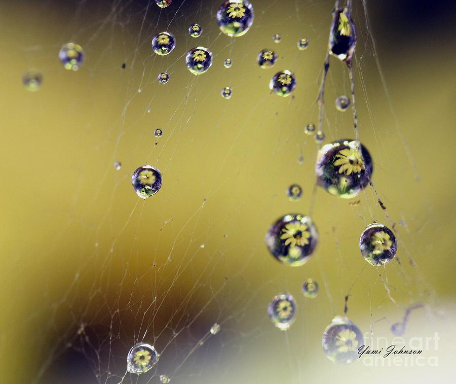 Raindrops On The Spider Web Photograph  - Raindrops On The Spider Web Fine Art Print