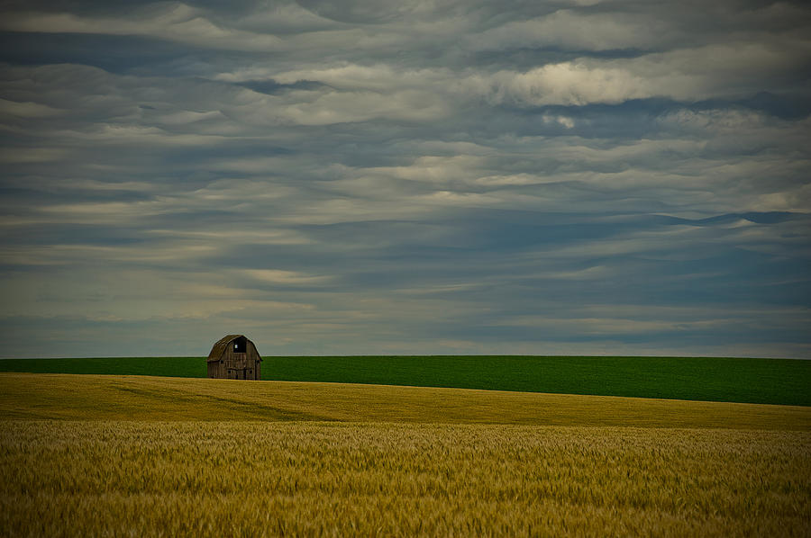 Wheat Photograph - Rainy Day Blues by Dan Mihai