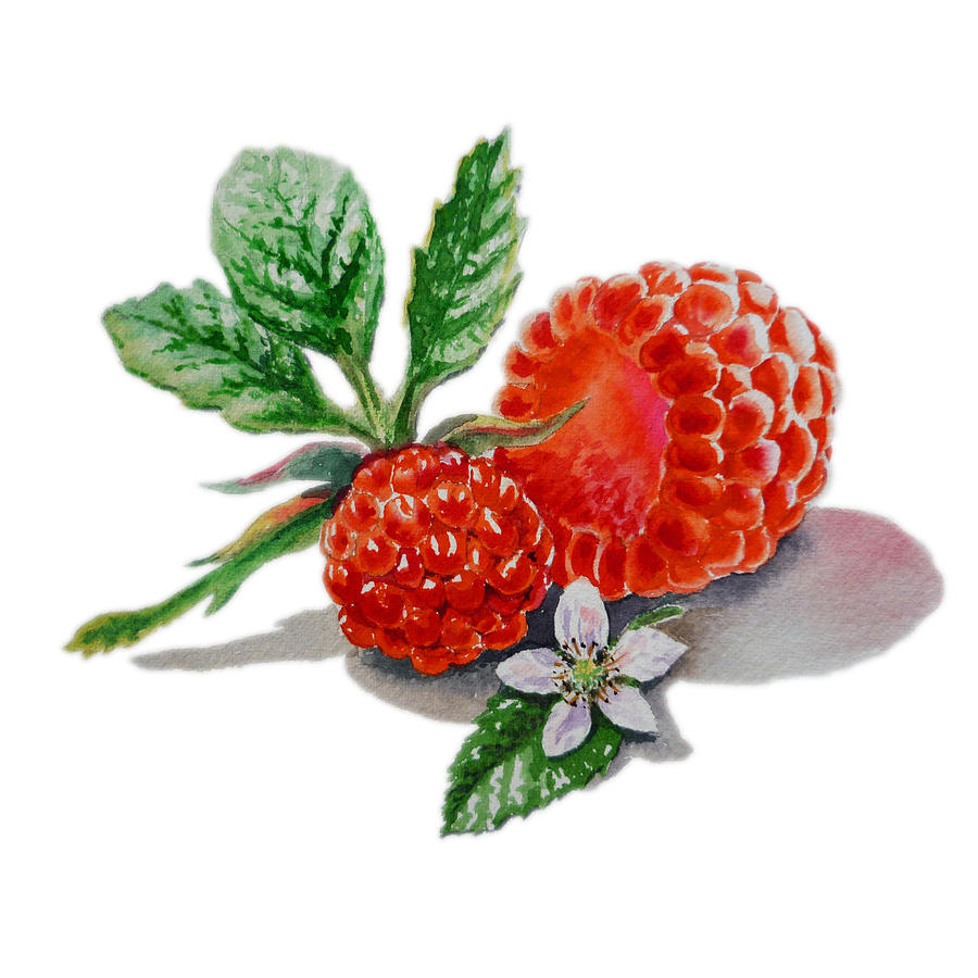 Raspberries Painting  - Raspberries Fine Art Print