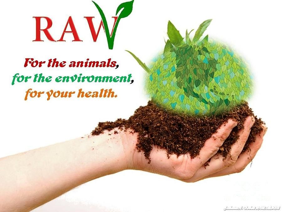 essays on environmental health Health depends on the environment in which one is born and brought up environment can be both a causes as cure of many diseases in the context of health and disease environment may be divided.