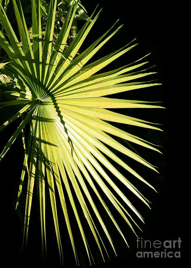 Palm Photograph - Rays Of Light by Sabrina L Ryan