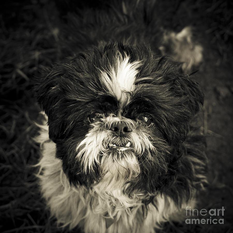 Animal Photograph - Real Character by Jay Taylor