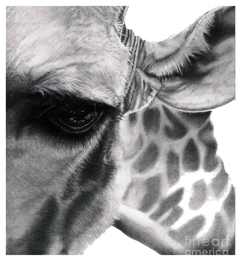 realistic pencil drawing of a giraffe original pencil