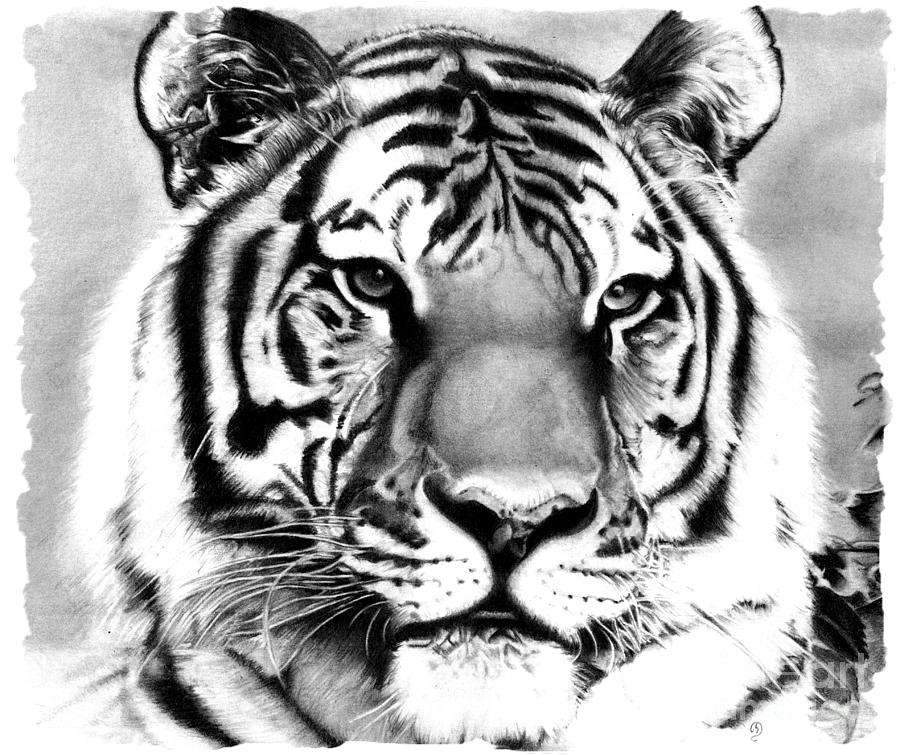 how to draw tiger print