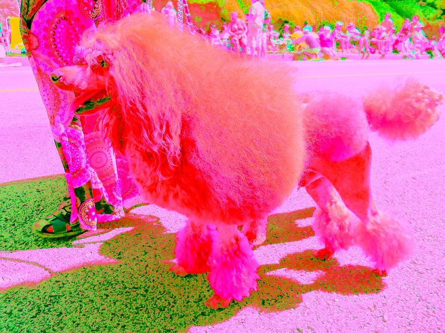 Really Pink Poodle Digital Art  - Really Pink Poodle Fine Art Print