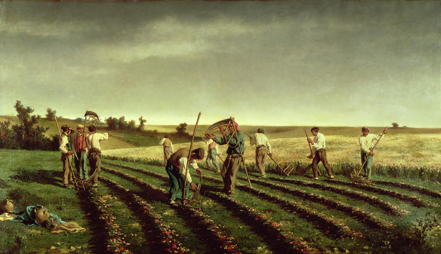 Reaping Sainfoin In Chambaudouin Painting