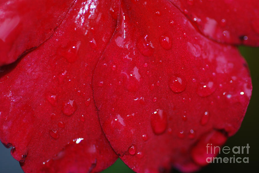 Red And Wet Photograph