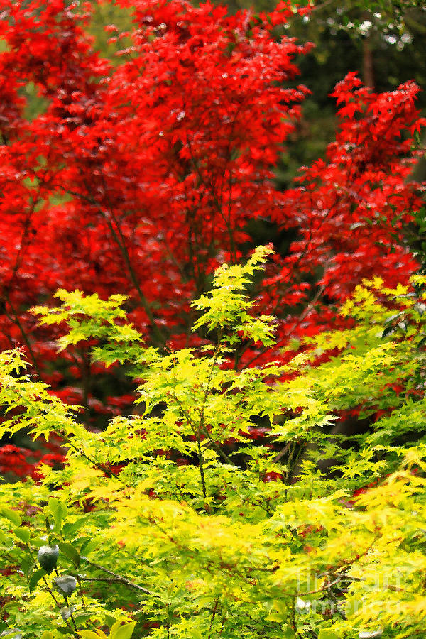 Red Leaves Photograph - Red And Yellow Leaves by James Eddy